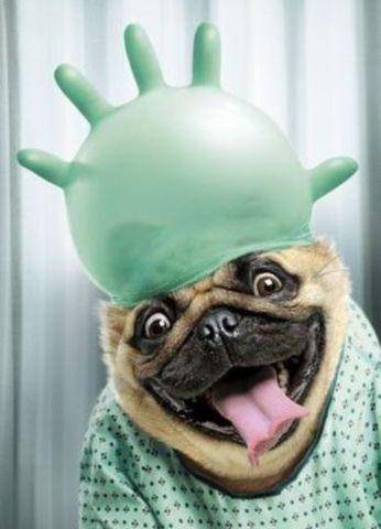 Wild and Crazy Dog! (Image via Pinterest)