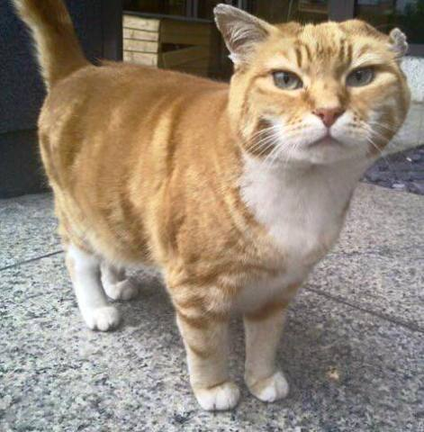 Olly the Airport Cat (Image via Facebook)