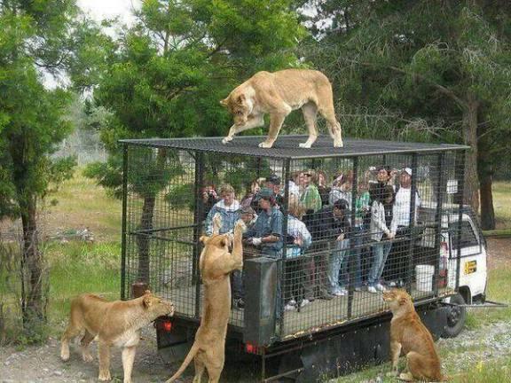 Orana Wildlife Park, New Zealand (Image via Viral Nova)