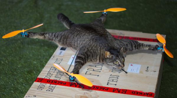 Kitty Hawk: Flying Feline Enjoys An Uplifting Afterlife As A Helicopter