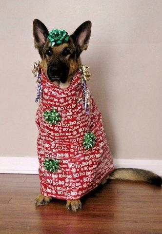 Tips And Hacks On How To Dress Your Dog For The Holidays