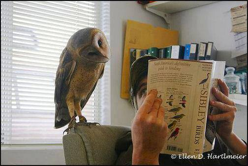Reading Owl (Image via La Bioguia, Photo by Ellen D. Hartimeier)