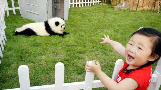 Panda Dog (Image via Hong Kong Housewife)