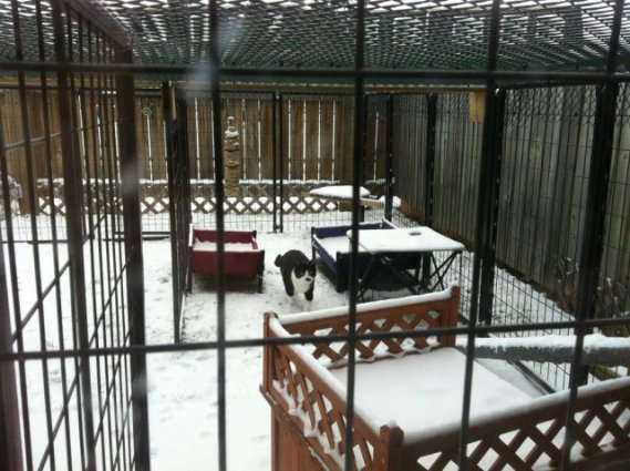 Cat Patio in Winter (Photo by dawnwastaken/2013. Used by permission)