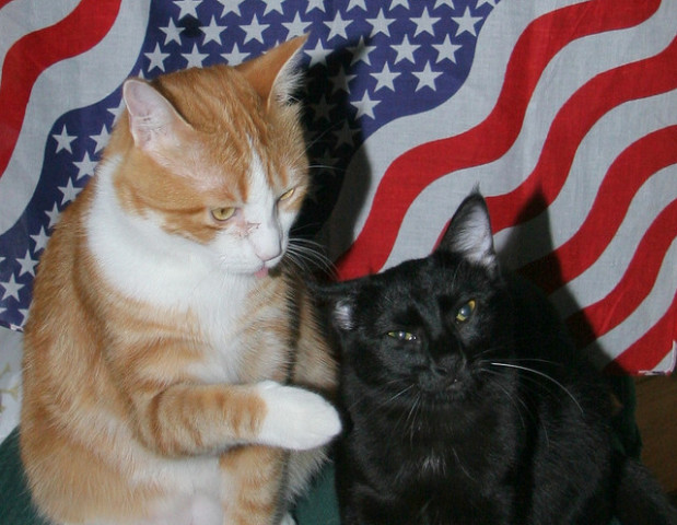 "Cats engaging in a ""presidential debate"" (Photo by recubejim, flickr)"