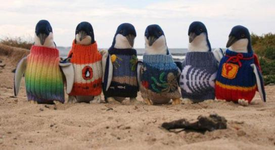 Penguin Sweaters (You Tube Image)