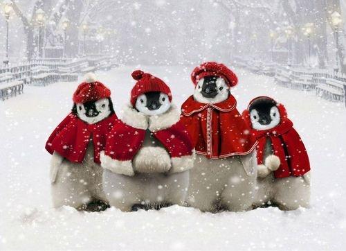 Penguins In Perfect Harmony (Image via Midnightpoem.tumblr.com)