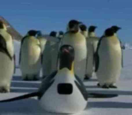 Animatronic Penguin On The Job (You Tube Image)