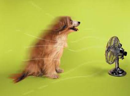 Dog enjoying fan: Source: Penlive.com