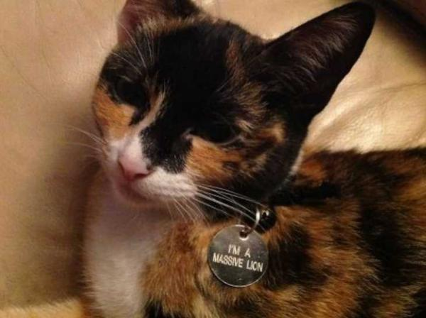 Necked Up: The Top 10 Weird and Bizarre Pet Collar Tags