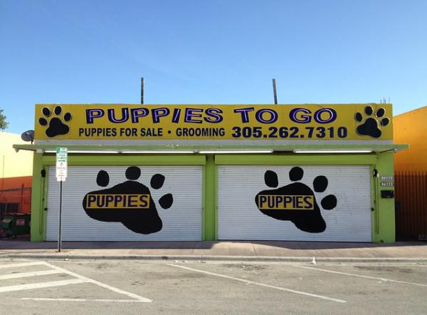 Fur & Loathing: 10 More Weird & Bizarre Pet Grooming Shop Signs