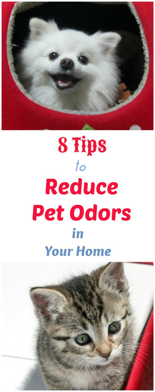 How To Reduce Pet Odors In Your Home