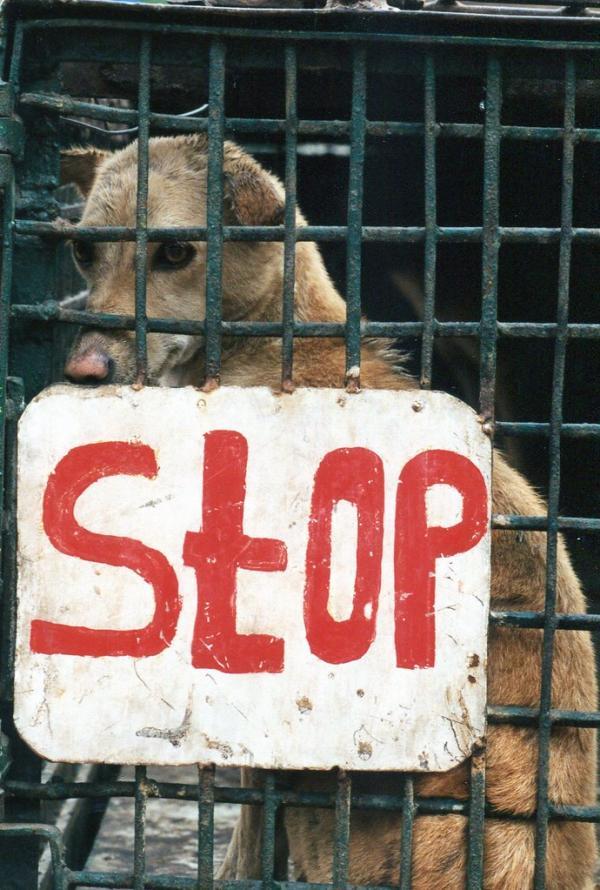 Helter Shelter The Top 10 Weird Amp Bizarre Animal Shelter Signs Petslady Com