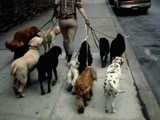 Dog walking the neighborhood!: image via animalplanet.com