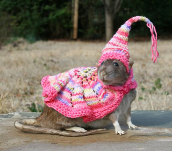 Sure, dress up your rodents; just don't kiss them!: image by Patti Haskins via gothamist.com