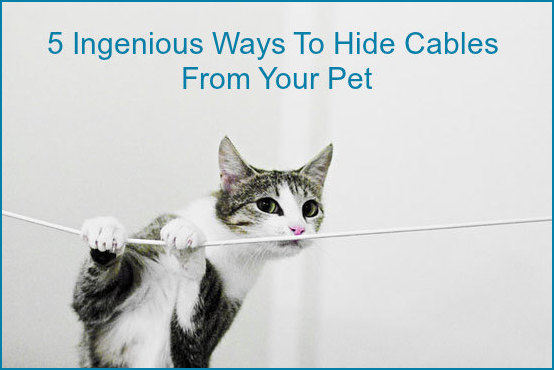 5 Ingenious Ways To Hide Cable From Your Pets | Petslady.com
