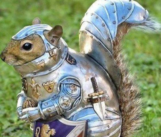 Armored Squirrel (Image via John Barker/Facebook)