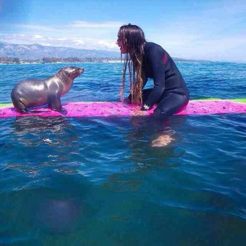 Sea Lion Pup on a Surfboard (Image via Facebook)