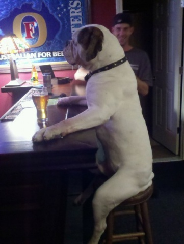 Dog at a Bar (Image via Pinterest)