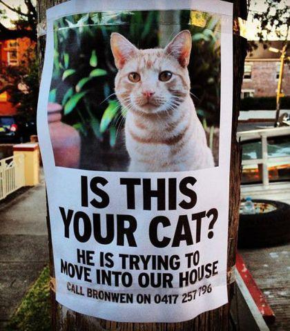 Cat Invader (Image via The Meta Picture)
