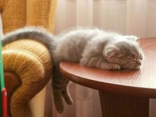 Cat Nap (Image via Milkshk)