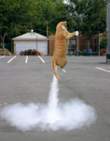 Rocket Cat (Image via Pinterest)