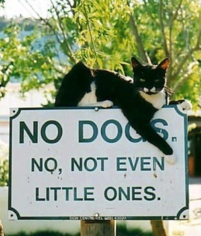 Cat on a No Dogs Sign (Image via Twitter)