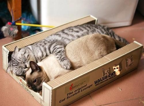 Two Cats in a Box (Image via Pinterest)