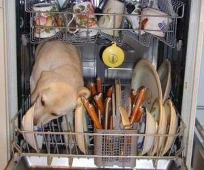 Dog Helpiing With The Dishes (Image via Pinterest)