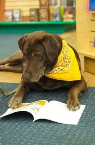 Dog Reading (Image via Facebook)