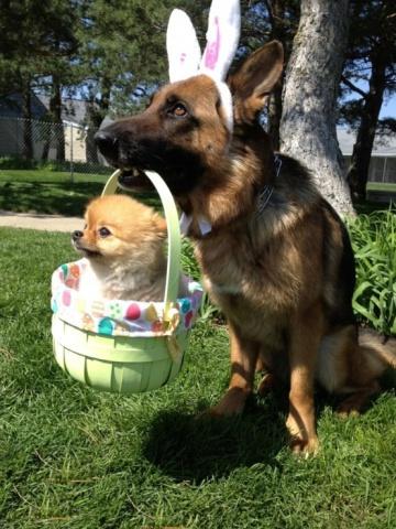 Easter Dog and Basket (Image via Pinterest)