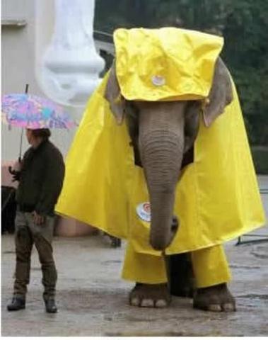 Elephant in a Raincoat (Photo via Pinterest)