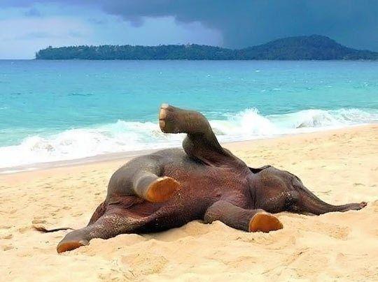 Baby Elephant at the Beach (Image via Pinterest)