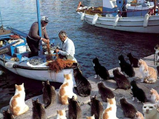 Cats Waiting for the Catch of the Day (Image via Facebook)