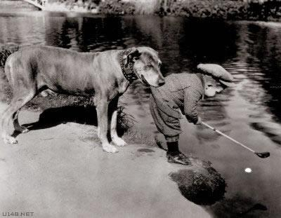 Caddy Dog (Image via La Dolfina)