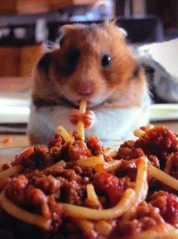 Spaghetti-Eating Hamster (Image via Buzzfeed)