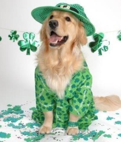 Irish Golden Retriever (Image via Pinterest)