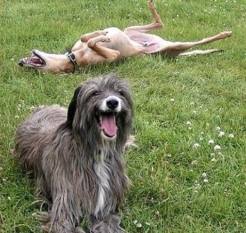 Dogs Laughing (Image via Pinterest)