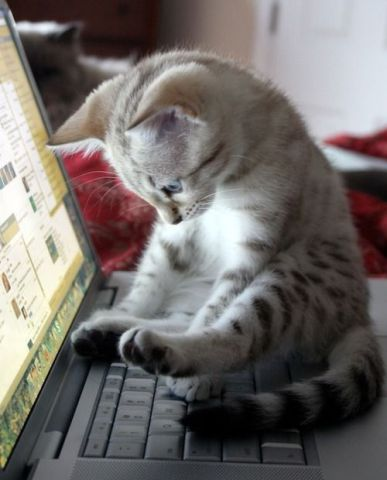 Kitten on the Computer Keys (Image via Gallery Gencept)