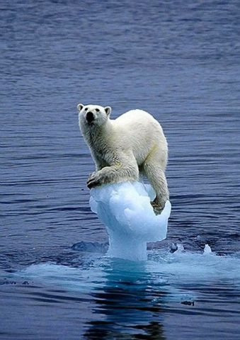 Polar Bear on Tiny Iceberg (Image via Most Beautiful Pages)