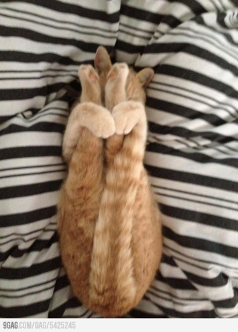 Contortionist Cat (Image via Pinterest)