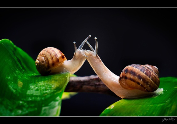 Snails in Love (Image via Pinterest)