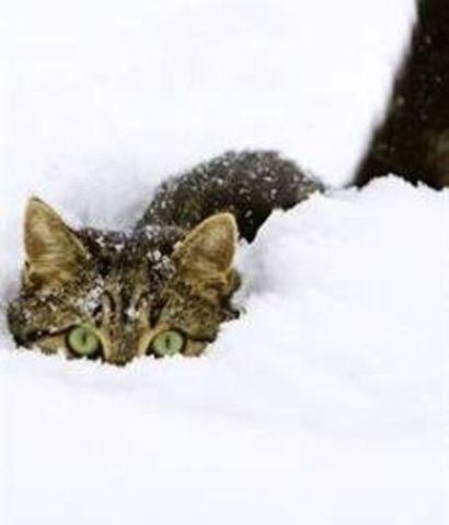 Cat in Deep Snow (Image via Pinterest)