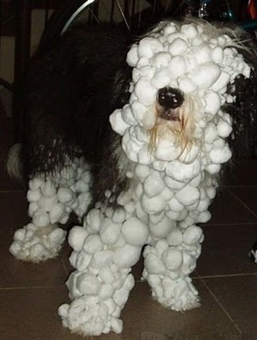 Snow Dog (Image via Pinterest)