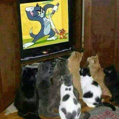 Cats Watching Tom and Jerry Cartoons (Image via Facebook)