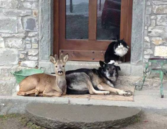 Cat, Dog, and Deer Hanging Out Together (Image via Pinterest)