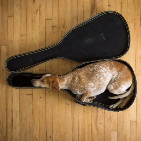Dog in Viola Case (Image via Pinterest)
