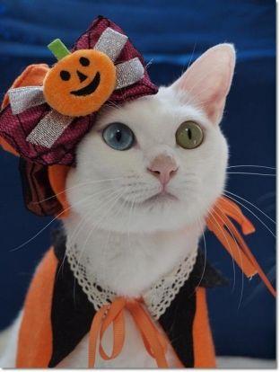Stylin' Halloween Cat (Image via PetC)
