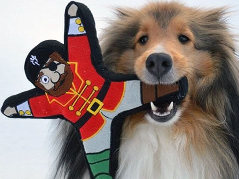 pirate dog toys