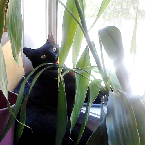 Plants dangerous to pets